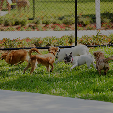 Large Dog Park at Logan Landing Townhomes Apartments